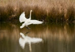 """Swan Landing"" Oxley Nature Center, Tulsa, OK"